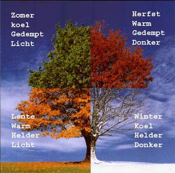 boom met de 4 basis kleurtype: zomertype, herfsttype, wintertype, lentetype.